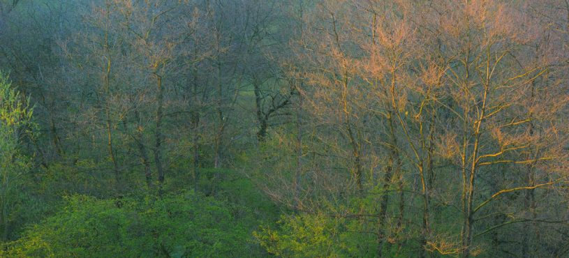 Frühlingspastell (Pastels of Spring) 2015